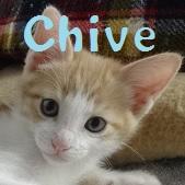 Chive.jpg