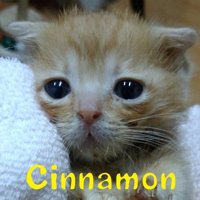 Cinnamon_20170625024652915.jpg
