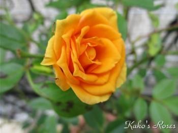 s-IMG_5210k30.jpg