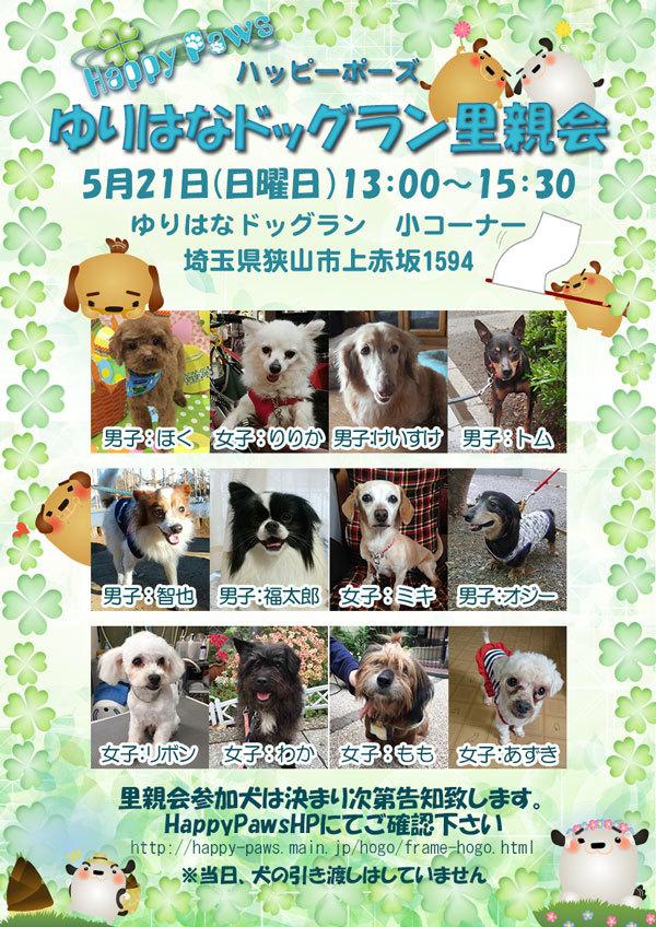 20170521-dog.jpg