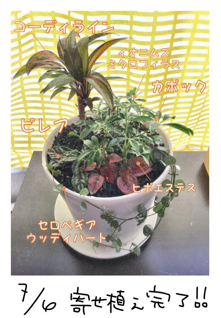 fc2blog_20170706174340265.jpg