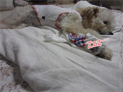 暑い日の寝床2