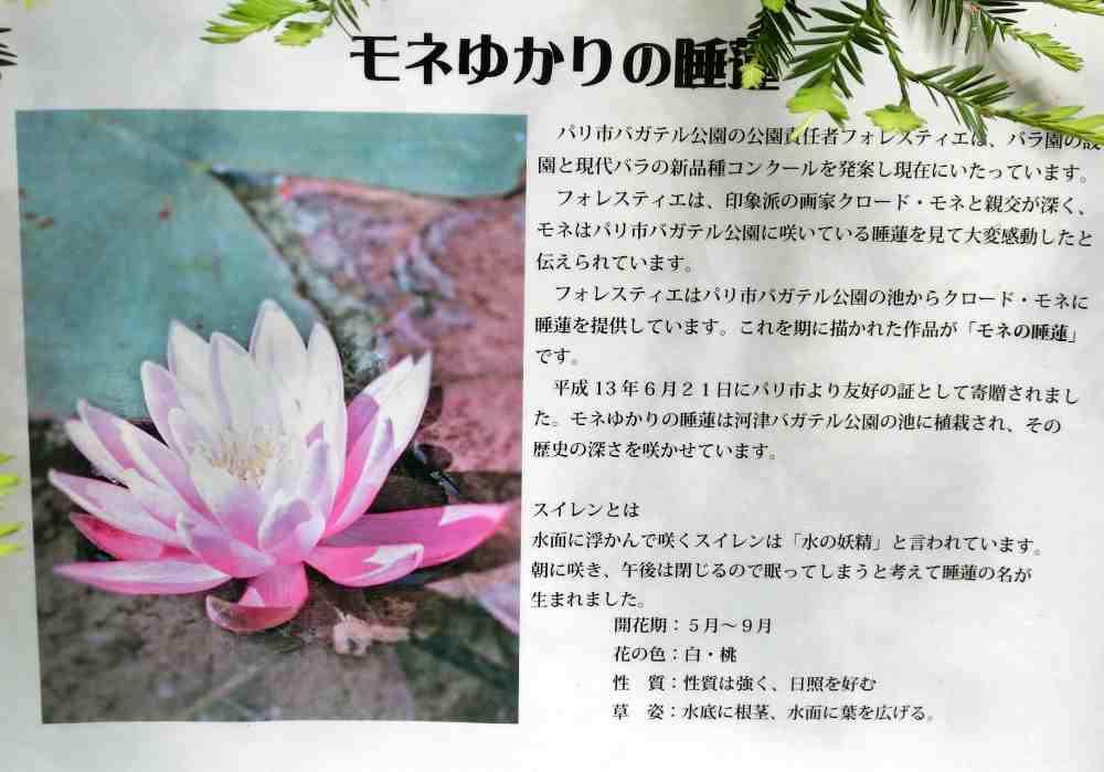 kawadubagaterukouenn5.jpg