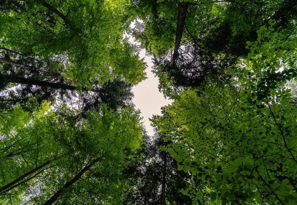 forest-3409907_960_720_convert_20181208153002.jpg