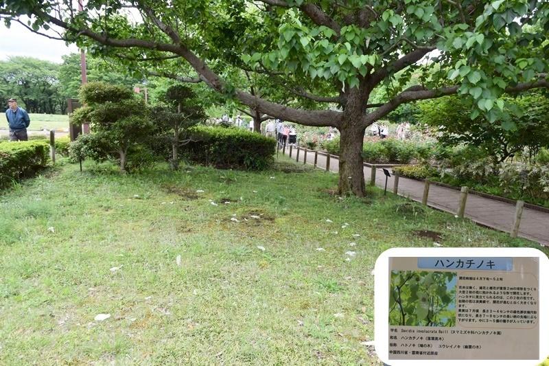 DSC_1450-20170517.jpg