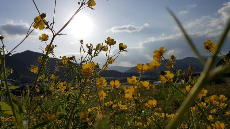 黄色の花に囲まれて