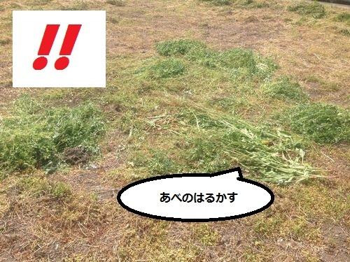 IMG_7151aaa.jpg