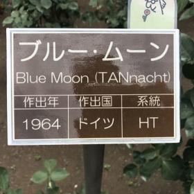 20170608_blue_moon_n.jpg