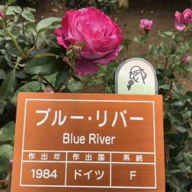 20170608_blue_river_n.jpg