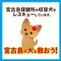 宮古島の犬を救おう!