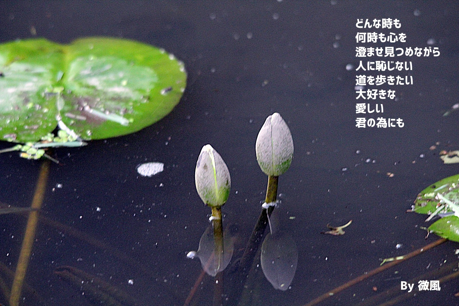 2017-07-01-a.jpg