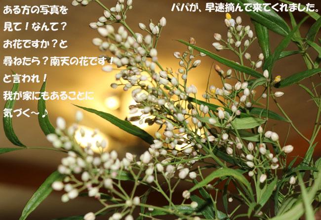 0A1A9136-98765678-98765.jpg