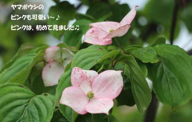 0A1A9685-87656-9876.jpg