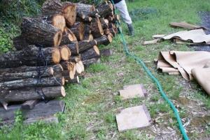 170428椎茸榾木に水かけ1