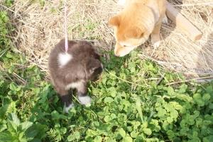170429サブと秋田犬1