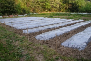 170430トマト第1圃場畝立て終了