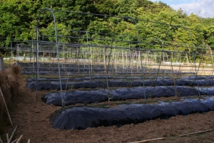 170526定植終わったトマト第2圃場1