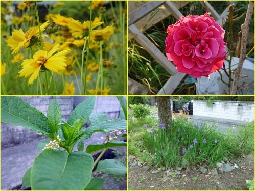 ご近所の花~