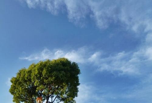 背の高い木と空