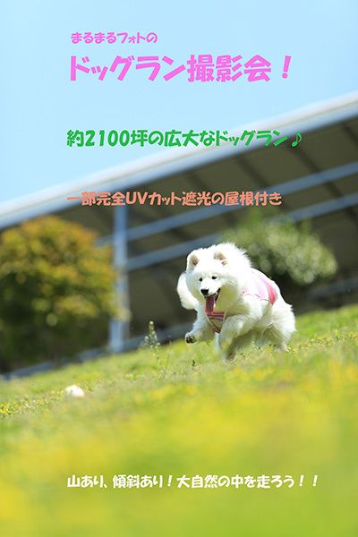 IMG_5182a.jpg