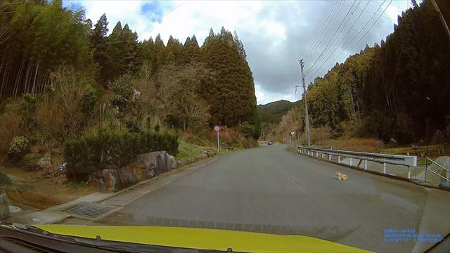 道路でくつろぐ犬-3