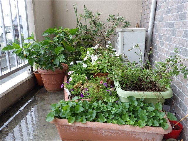 植木鉢を避難-1