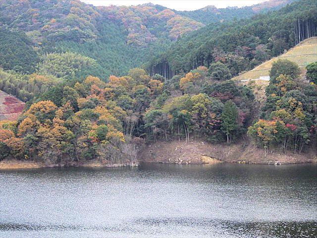 伊良原ダムの紅葉-2