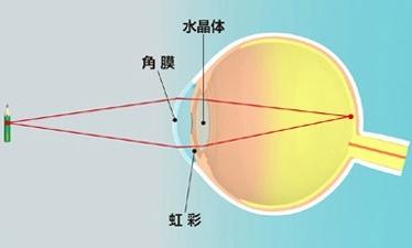 参天・角膜水晶体の不思議 ①