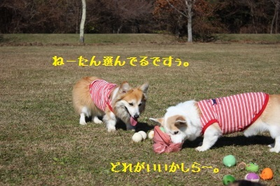 19IMG_7342.jpg