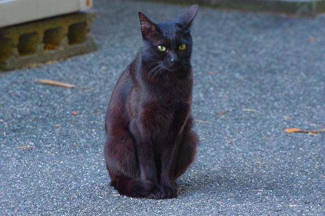 七瀬自然公園の猫ちゃん
