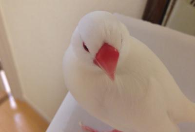 tokyobun1_.jpg