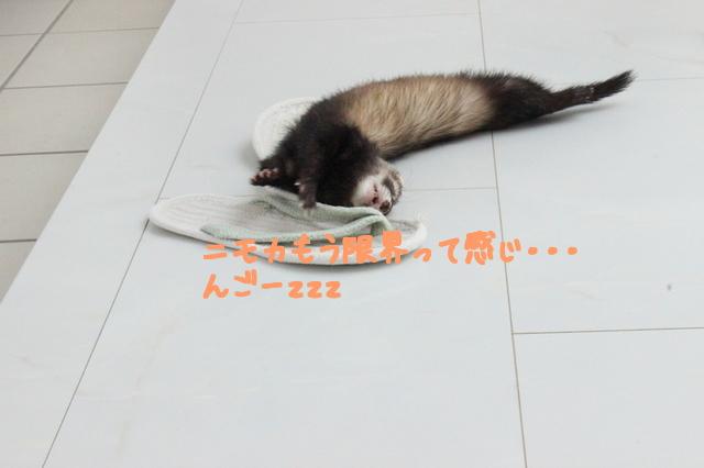 b2rfIcBS4uixjm21499343498_1499343560.jpg
