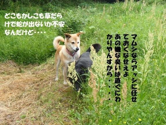 P5110310_convert_20170512081611.jpg