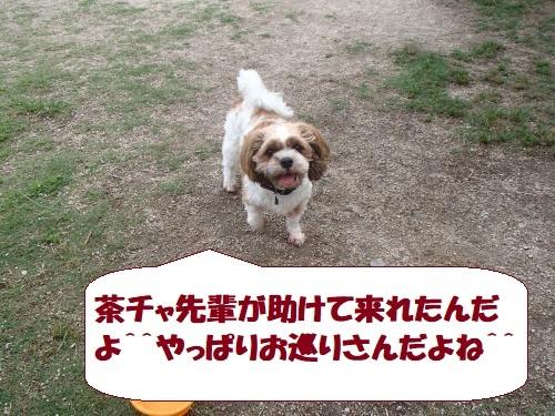 P6250200_convert_20170627152115.jpg