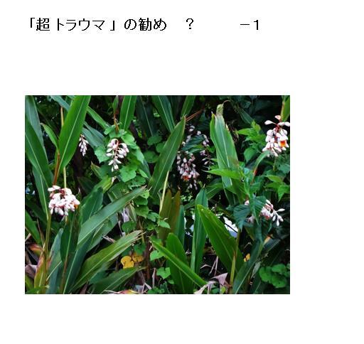 01_20170526093010b8b.jpg