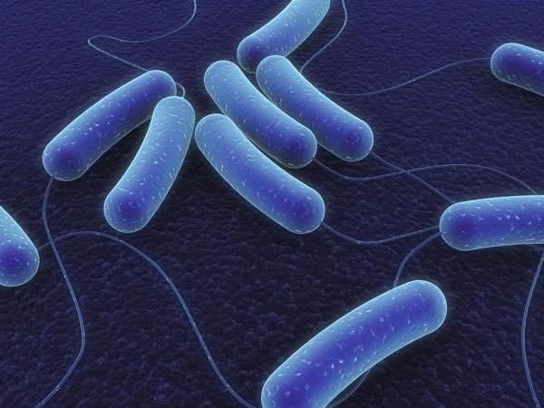 20170526 細菌