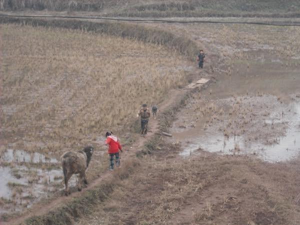 20170710 Chinaの田園風景