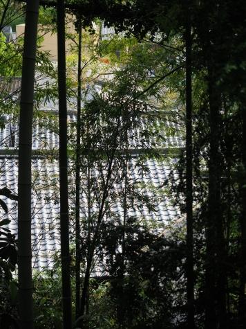 鶴形山の竹藪
