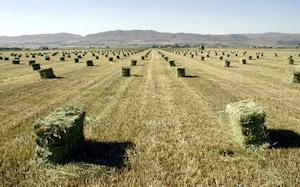 牧草を刈る