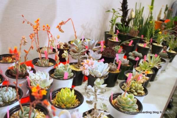花材 植物 多肉植物