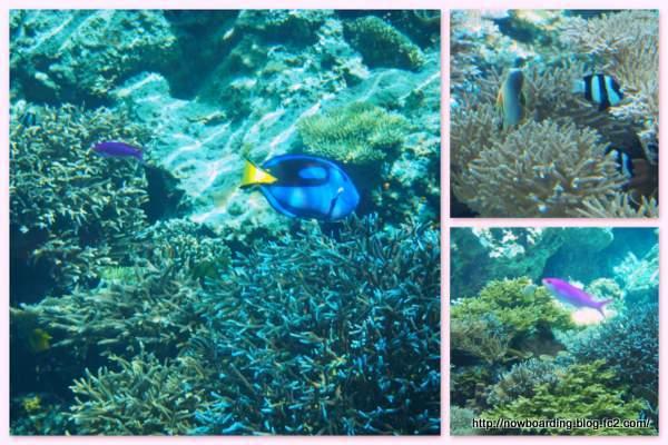 サンゴの海 熱帯魚