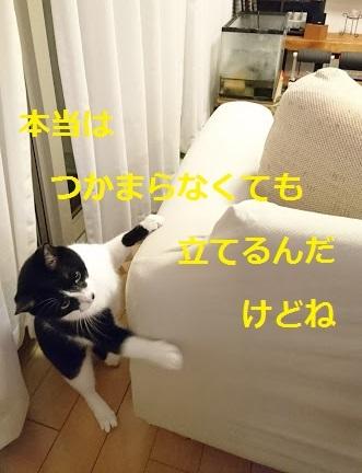 20170625220507e71.jpg
