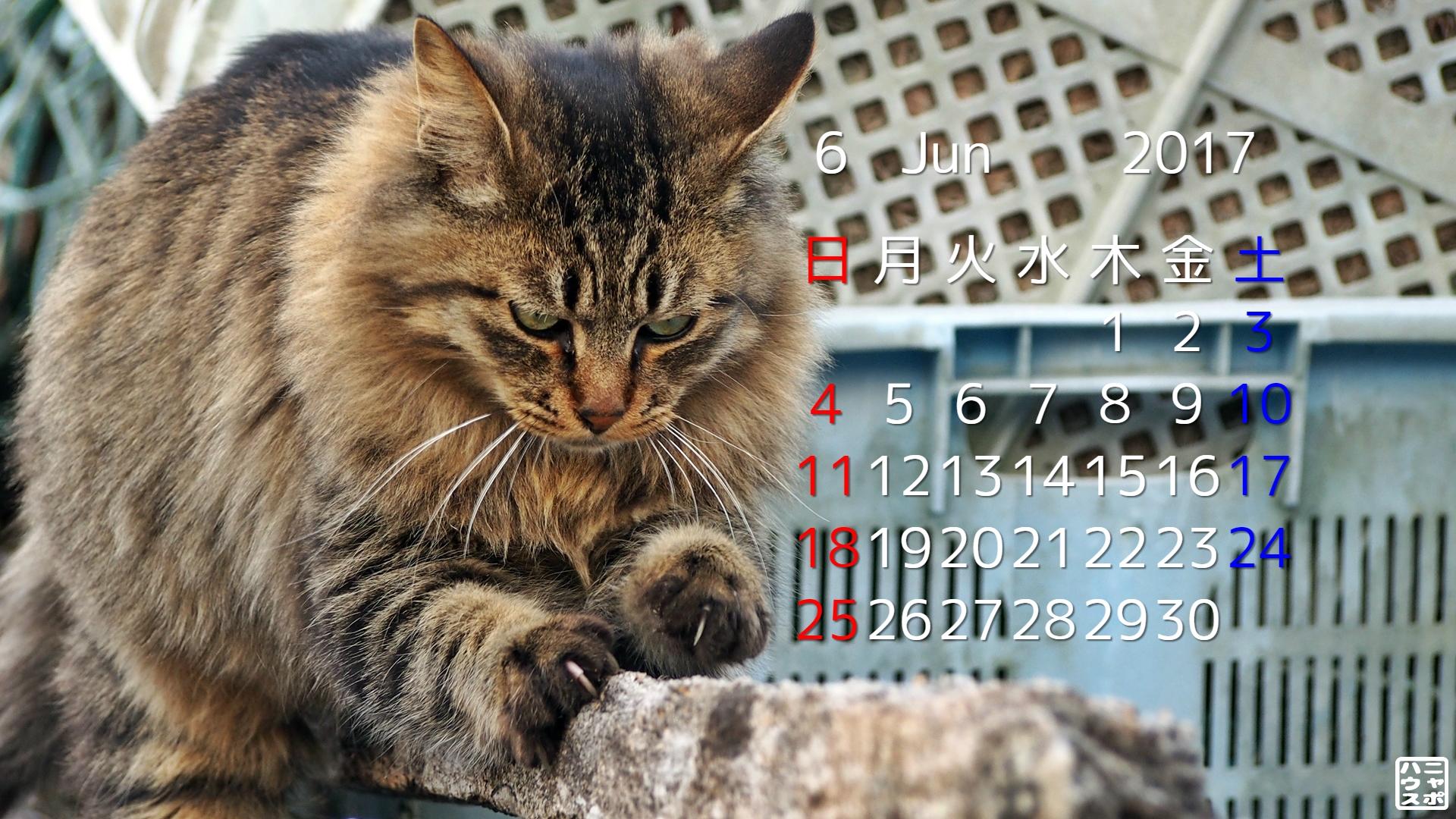2017年6月 猫デスクトップカレンダー