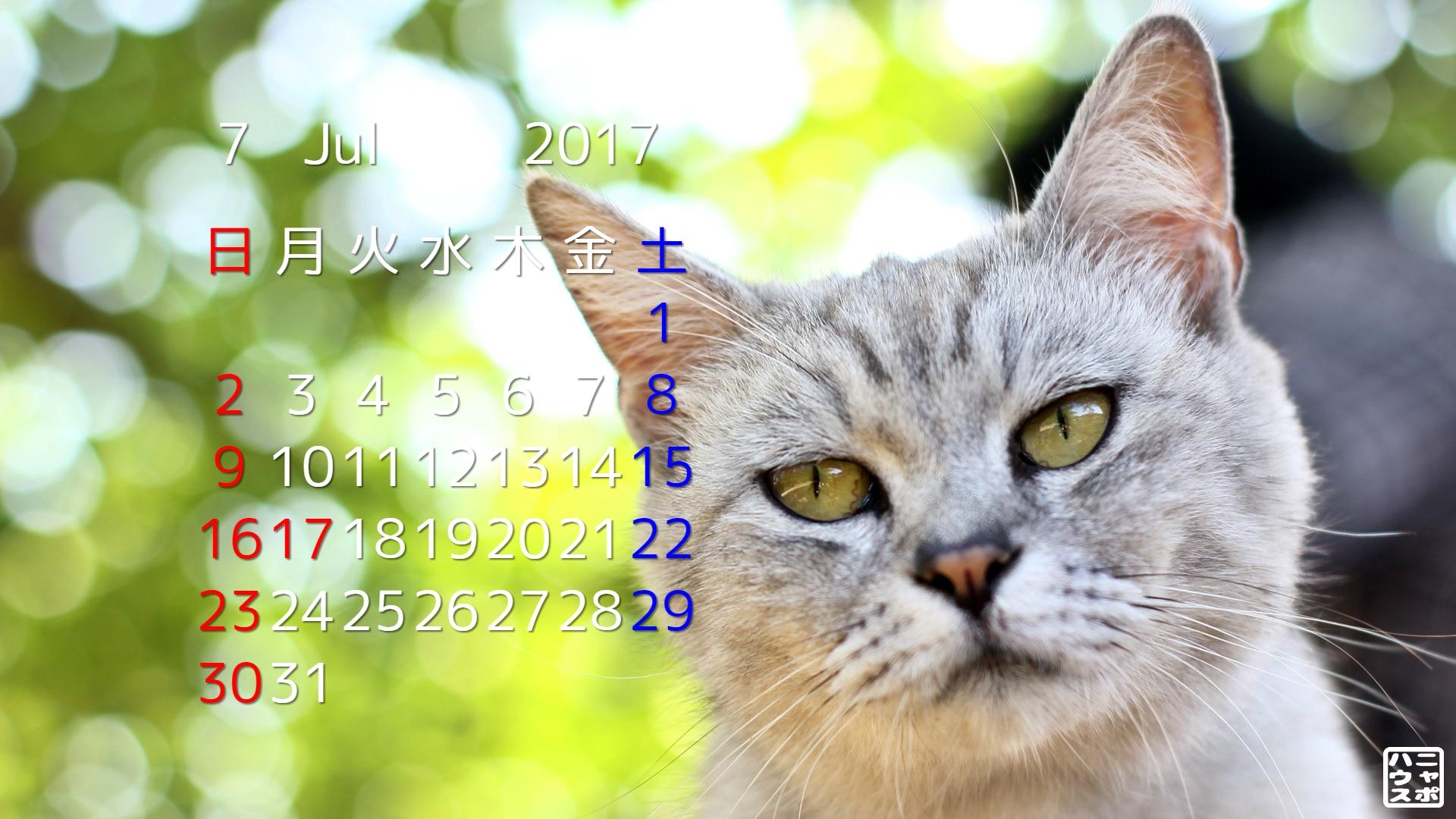 2017年7月 猫デスクトップカレンダー