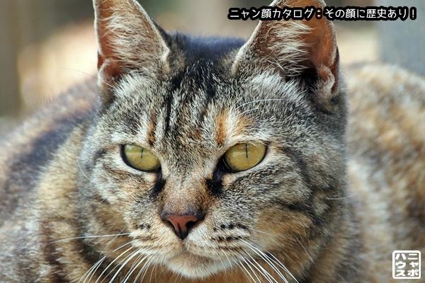 ニャン顔NO81 キジトラ猫さん