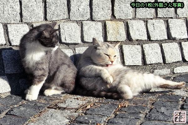 お腹を掃除する白猫さん♪