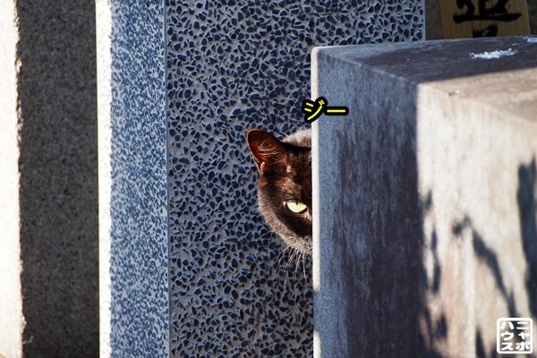 コッソリ見つめる猫