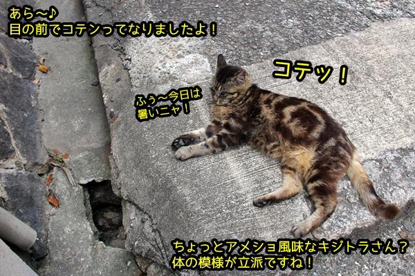 ニャポ旅39 初夏の尾道ぶらり猫巡り その2