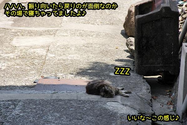 ニャポ旅39 初夏の尾道ぶらり猫巡り その3