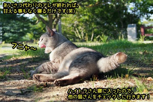 ニャポ旅39 初夏の尾道ぶらり猫巡り その4